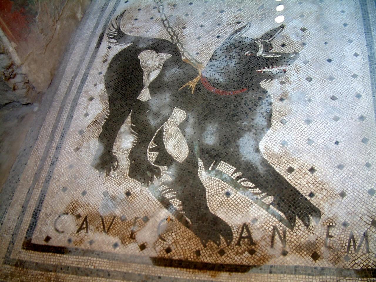 pompeii d og